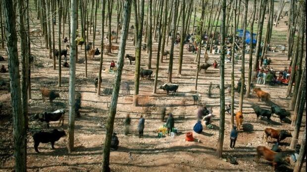 The Bull Market de Cai Sheng Xiang