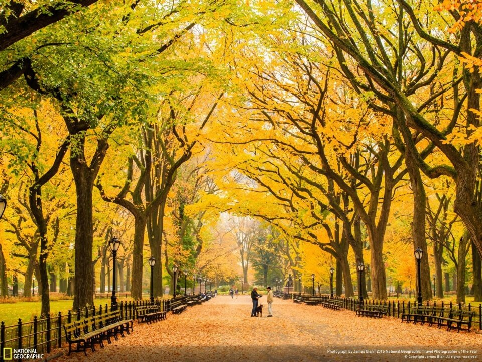 AUTUM AT CENTRAL PARK